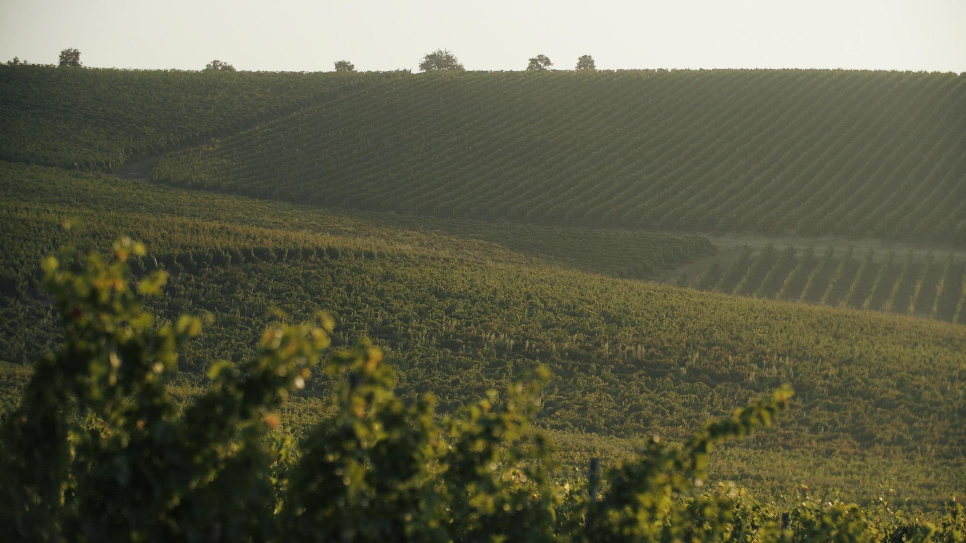 winery video
